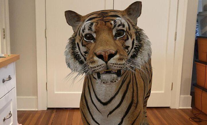 3d zvierata google